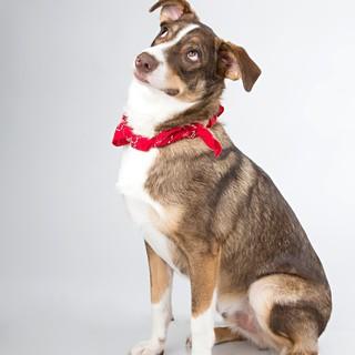 Quadro - Funny Dog