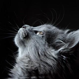 Quadro - Cat III
