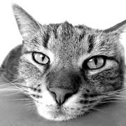 Quadro - Cat I
