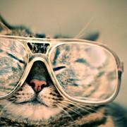 Quadro - Cat II