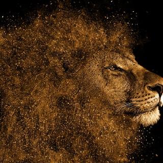 Quadro - Lion I