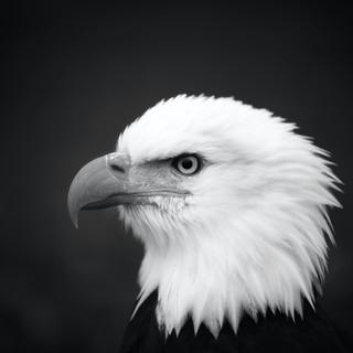 Quadro - White Bird