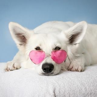 Quadro - White Dog