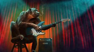 Music Animal
