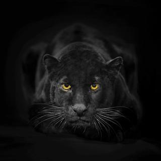 Quadro - Black Panther