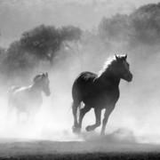 Quadro - Horse I