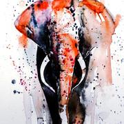 Quadro - Elephant Colors