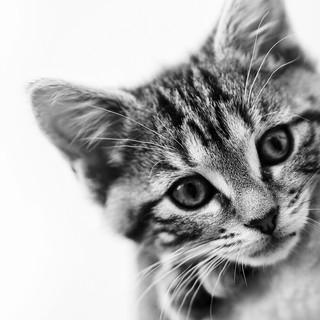Quadro - Mini Cat
