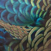 Quadro - Feather colors II