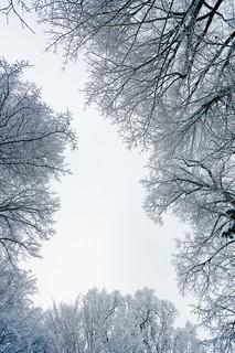 Eyeing Of Trees