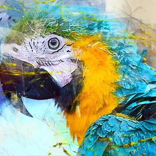 Quadro - Bird Colors