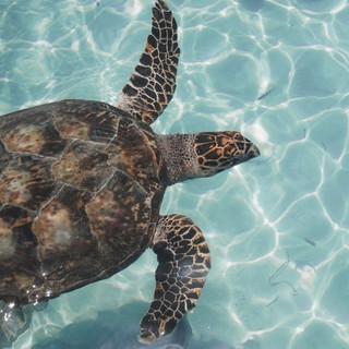 Quadro - Turtle I