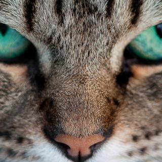 Quadro - Face Cat