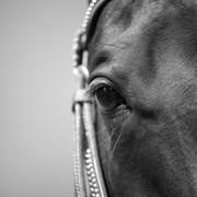 Quadro - Eye Horse