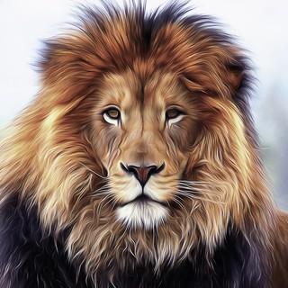 Quadro - lion II