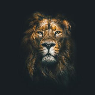 Quadro - Lion King