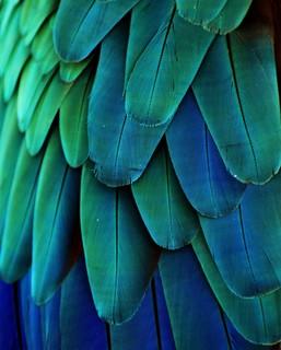 Feather I