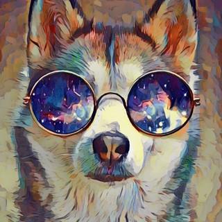 Quadro - Husky
